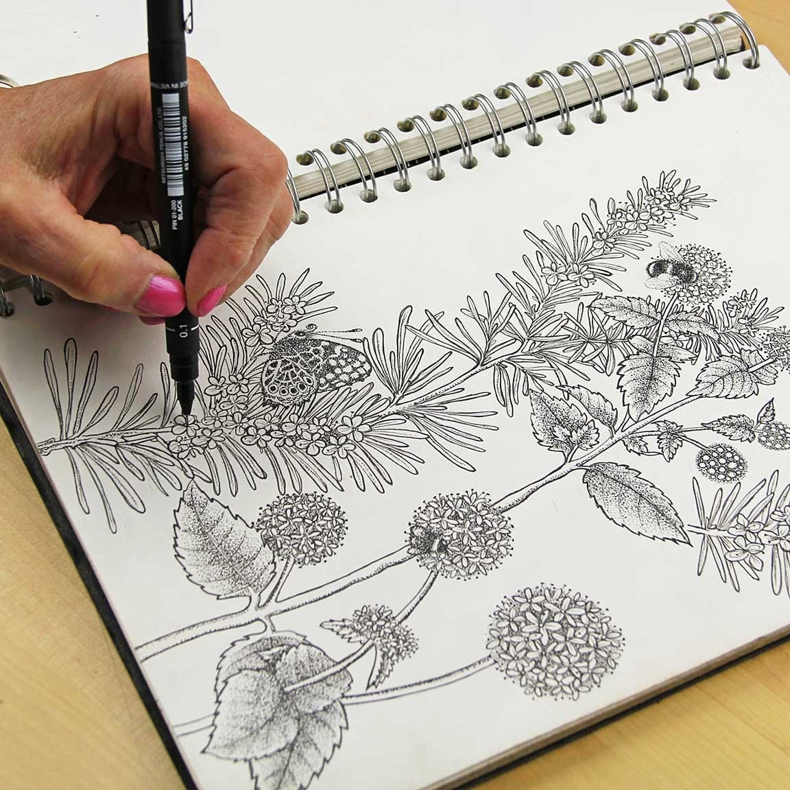 watermint-rosemary-drawing.jpg